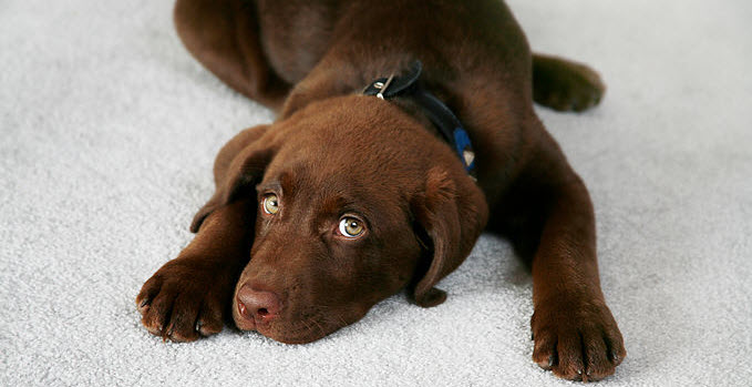 Pet Odor And Stain Remover San Diego